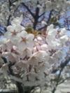 100516_cherry