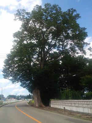 160824_a_big_wood_in_taiyu